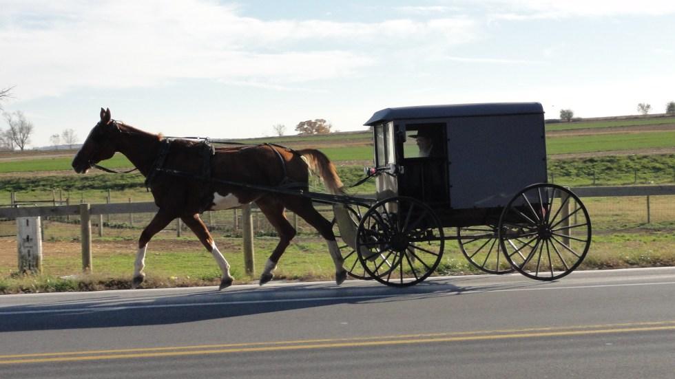 Carro amish