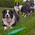"""The """"dog days"""" are the stretch of time in midsummer when the combined heat and humidity make the afternoons unbearable and send humans and dogs alike seeking shelter in cool […]"""