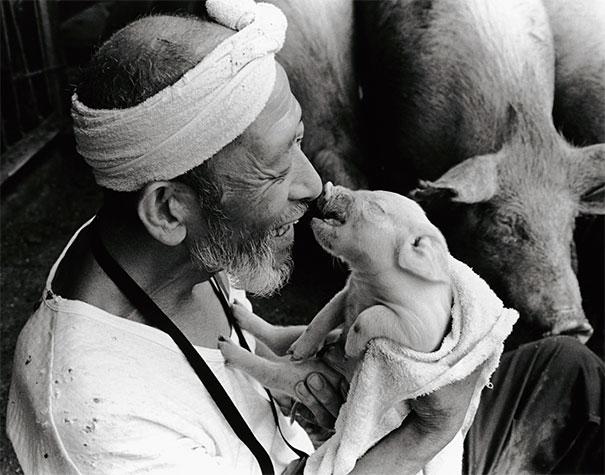 otchan-cute-pig-farmer-toshiteru-yamaji-1