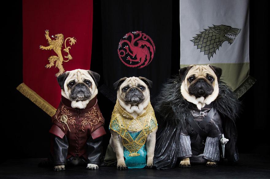 cute-pugs-game-of-thrones-pugs-of-westeros-9