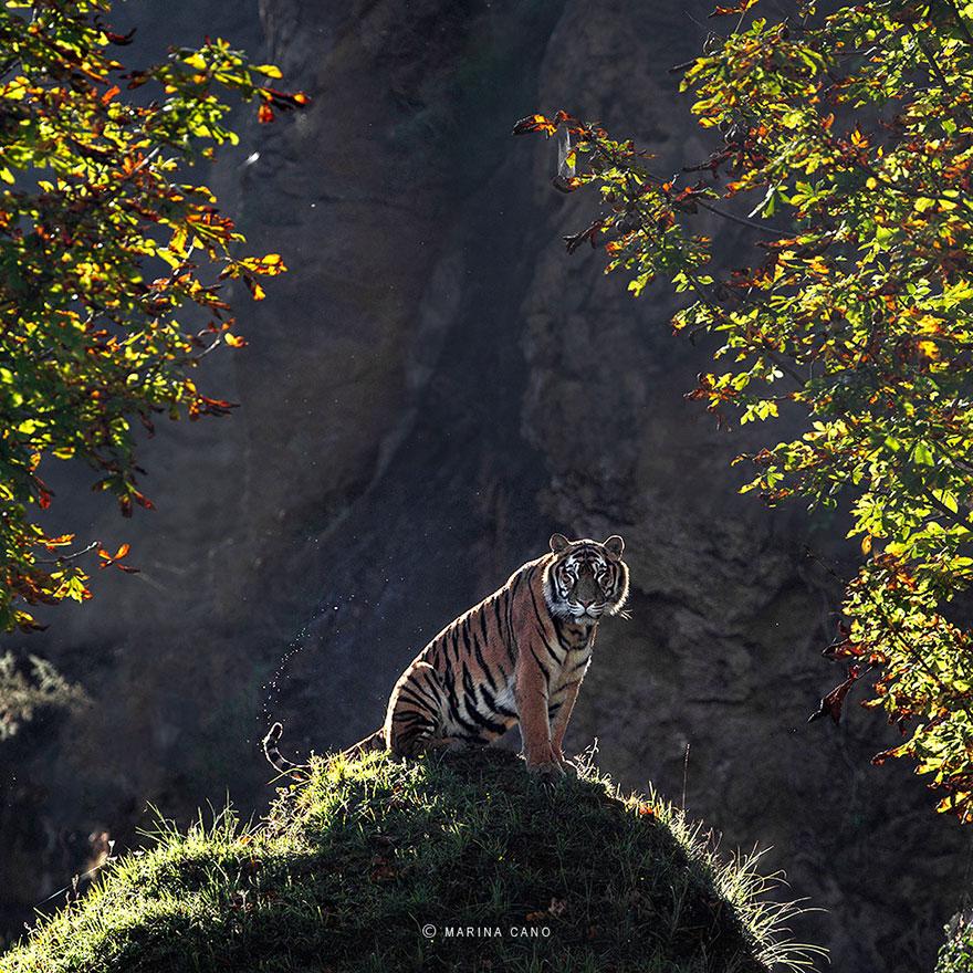 animal-wildlife-photography-marina-cano-13
