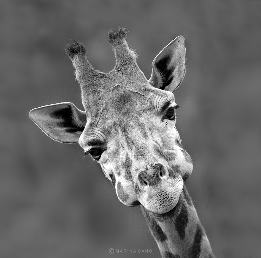 animal-wildlife-photography-marina-cano-31