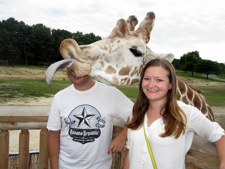 animales-photobomb-divertido (9)
