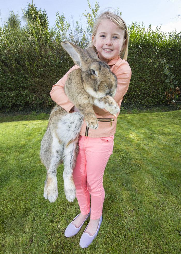 conejo-mas-grande-del-mundo (5)