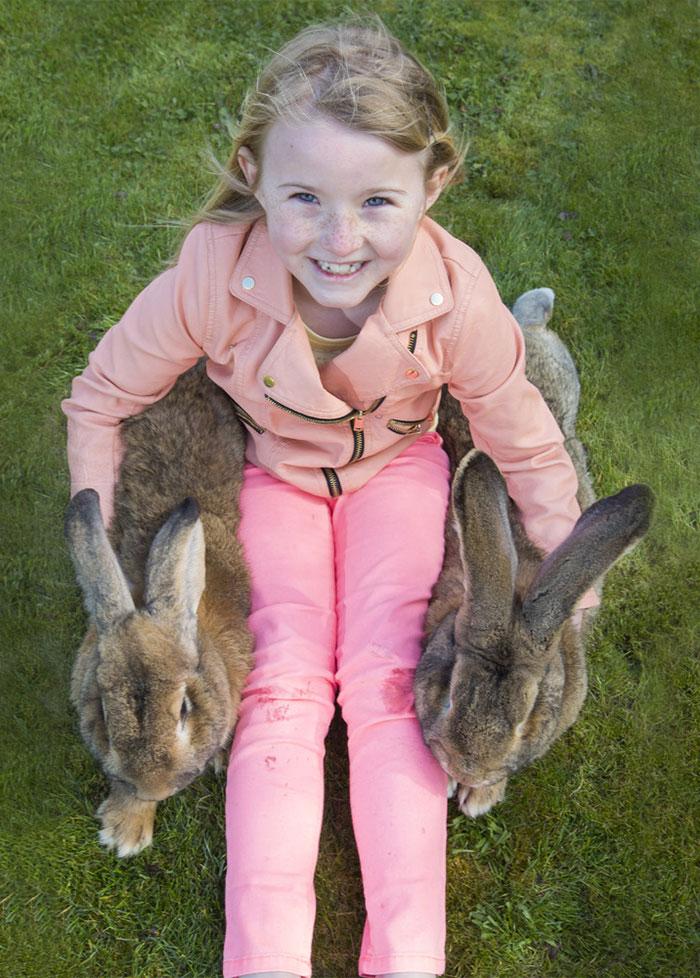 conejo-mas-grande-del-mundo (6)