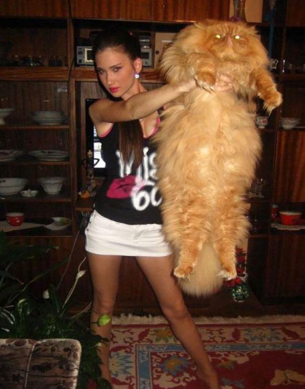 gatos-enormes (2)