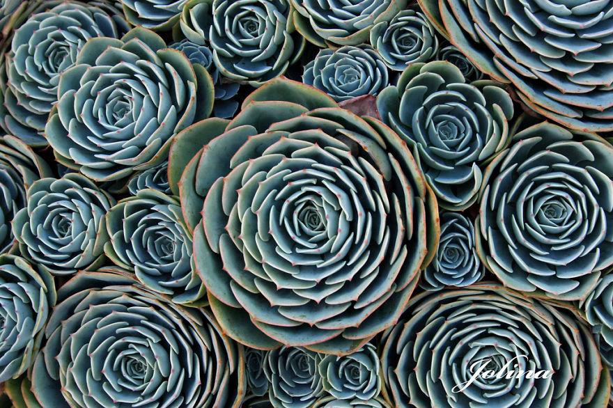 plantas-geometricas (9)