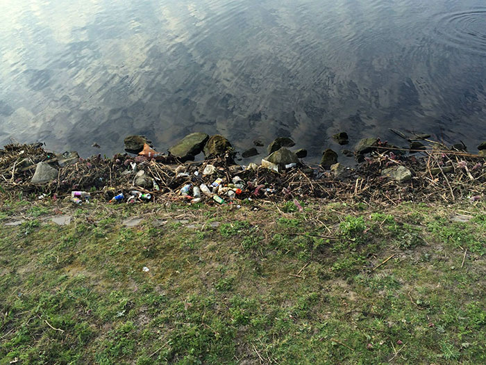proyecto-recoger-basura-diariamente-pigswegetwhatpigsdeserve-holanda (12)