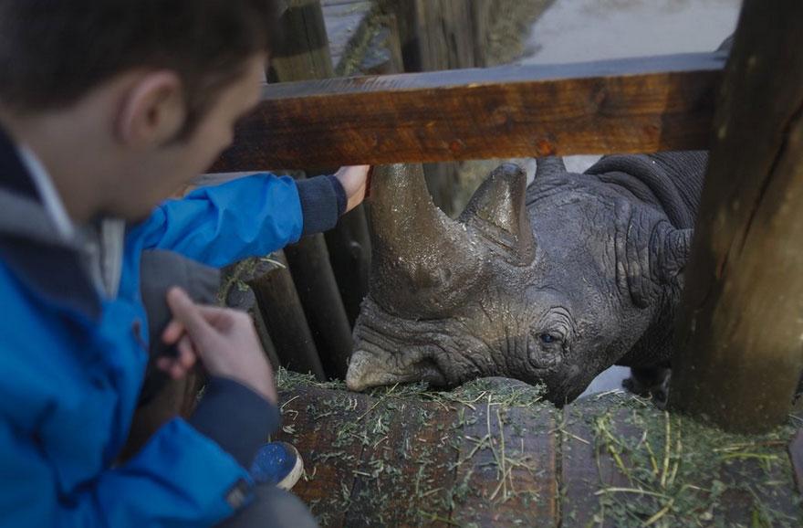 ultimo-rinoceronte-blanco-norte-protegido-kenia (6)