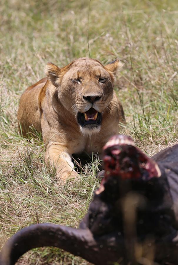veteranos-ejercito-entrenamiento-guardabosques-africanos-vetpaws-kinessa-johnson (1)