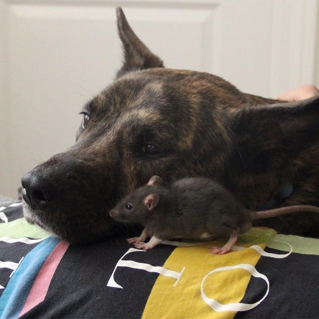 amistad-animal-riff-rata-osiris-perro (4)