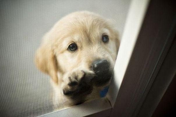 animales-pidiendo-entrar (1)