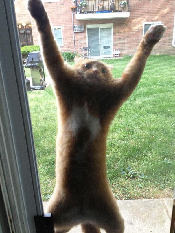 animales-pidiendo-entrar (18)