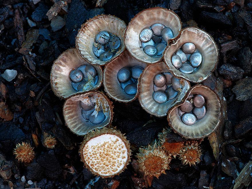 fotos-macro-hongos-steve-axford (24)