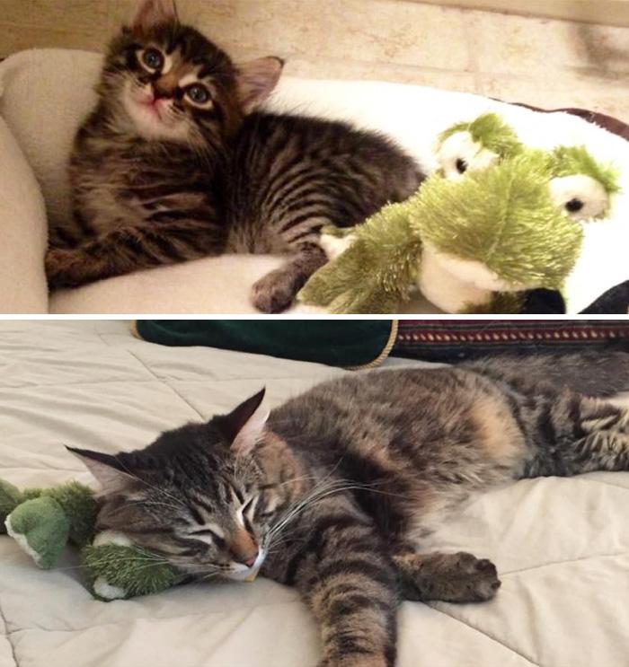 mascotas-creciendo-juguetes (15)