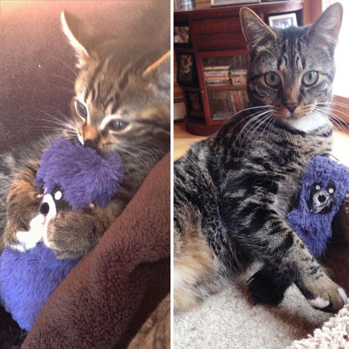 mascotas-creciendo-juguetes (28)