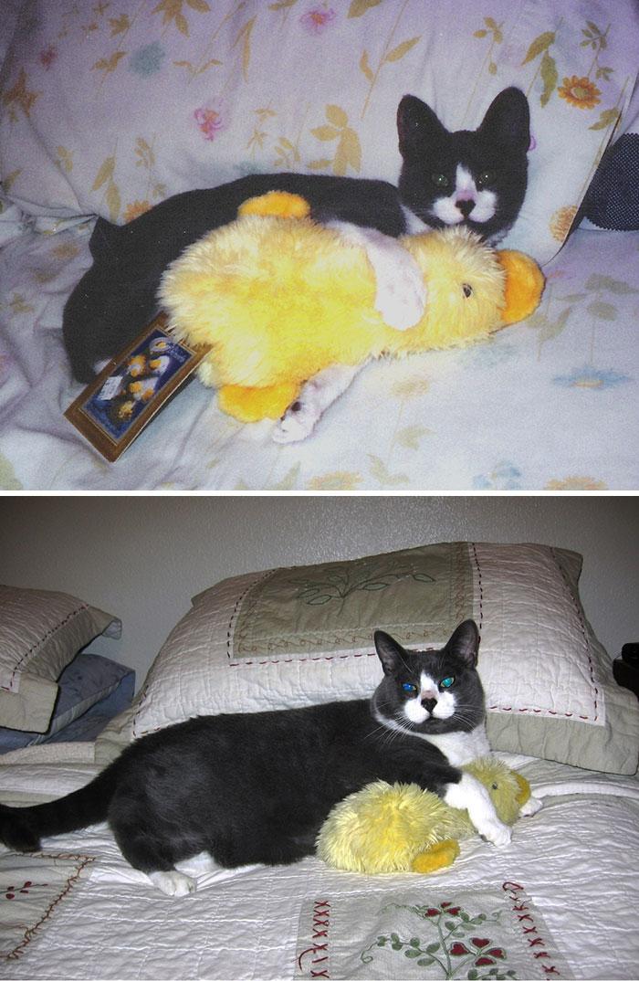 mascotas-creciendo-juguetes (4)