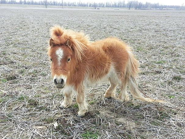 mini-caballos (3)