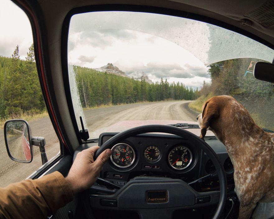 perro-maddie-viajes-moto-theron-humphrey (11)