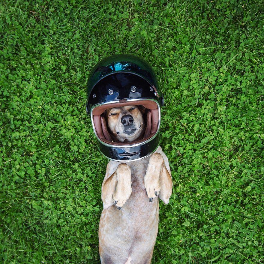 perro-maddie-viajes-moto-theron-humphrey (2)