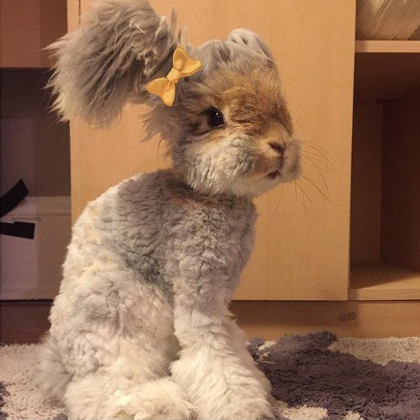 corte-pelo-orejas-conejo-angora-wally (1)