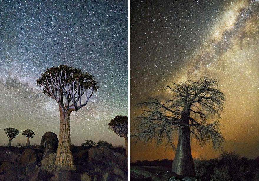 fotos-arboles-viejos-noche-estrellas-beth-moon (2)