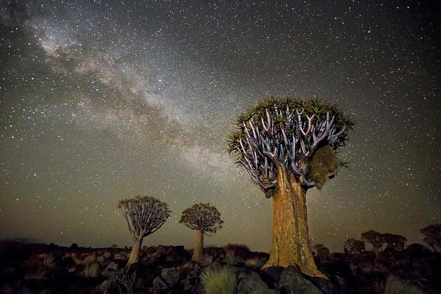 fotos-arboles-viejos-noche-estrellas-beth-moon (9)