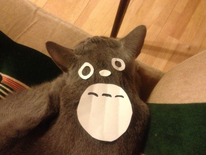 gatos-disfrazados-totoro-duenos-japon (4)