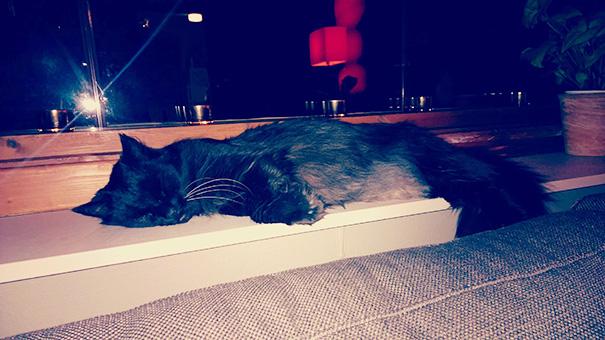 gatos-mayores-adoptados (15)