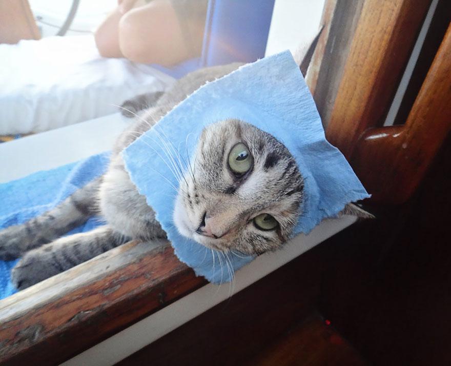 pareja-viajes-mundo-barco-gato-matt-jessica-johnson (23)