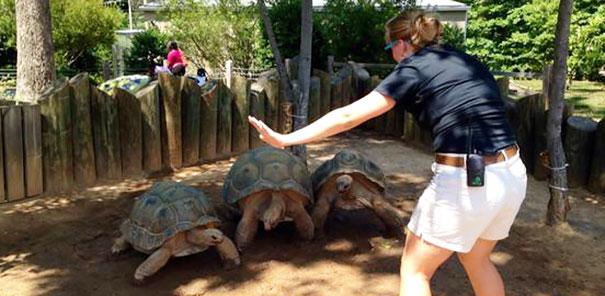 personal-zoos-recreando-escena-jorassic-world (2)