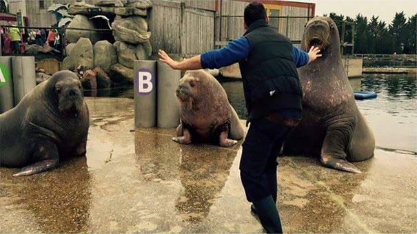 personal-zoos-recreando-escena-jorassic-world (7)
