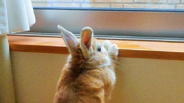 problemas-personas-bajas-conejo-koron-japon (5)