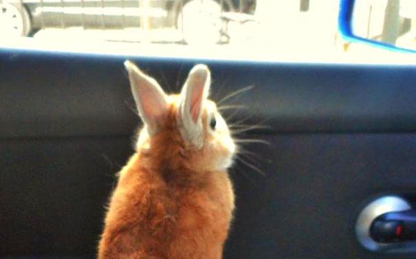 problemas-personas-bajas-conejo-koron-japon (6)