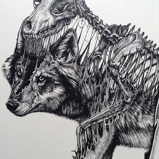 dibujos-esqueletos-animales-paul-jackson (2)
