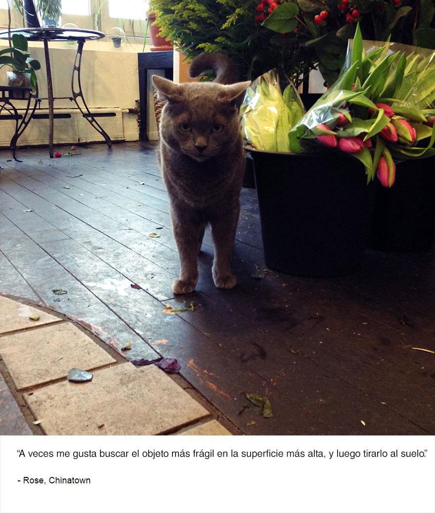 felinos-de-nueva-york-blog-jim-tews-11