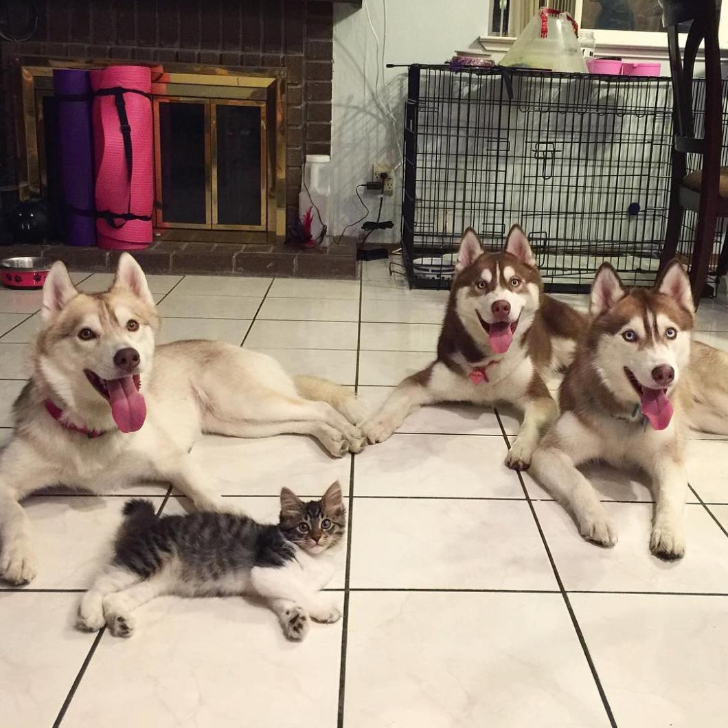 gatita-rosie-salvada-mama-adoptiva-husky-lilo (2)
