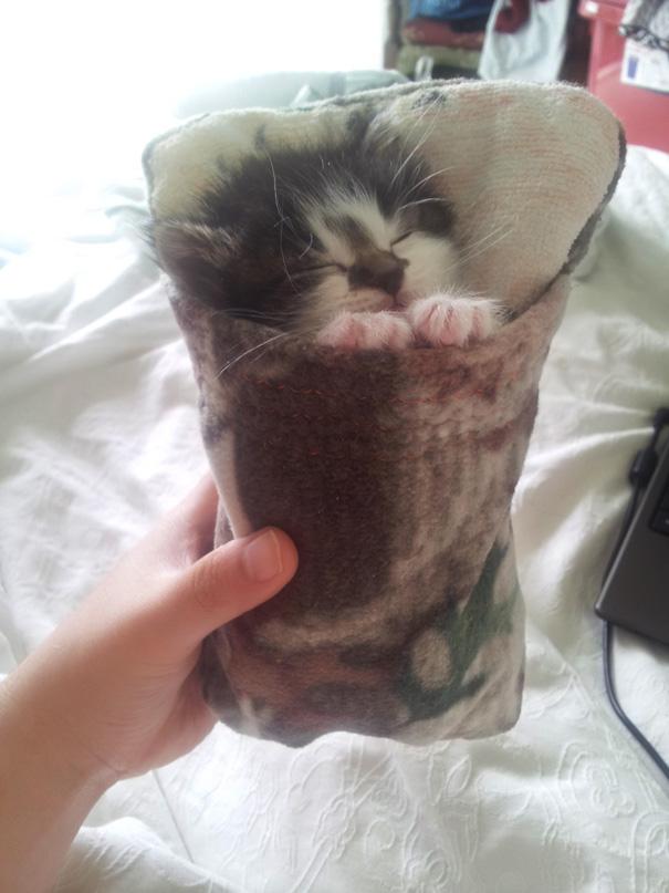 gatos-durmiendo (3)