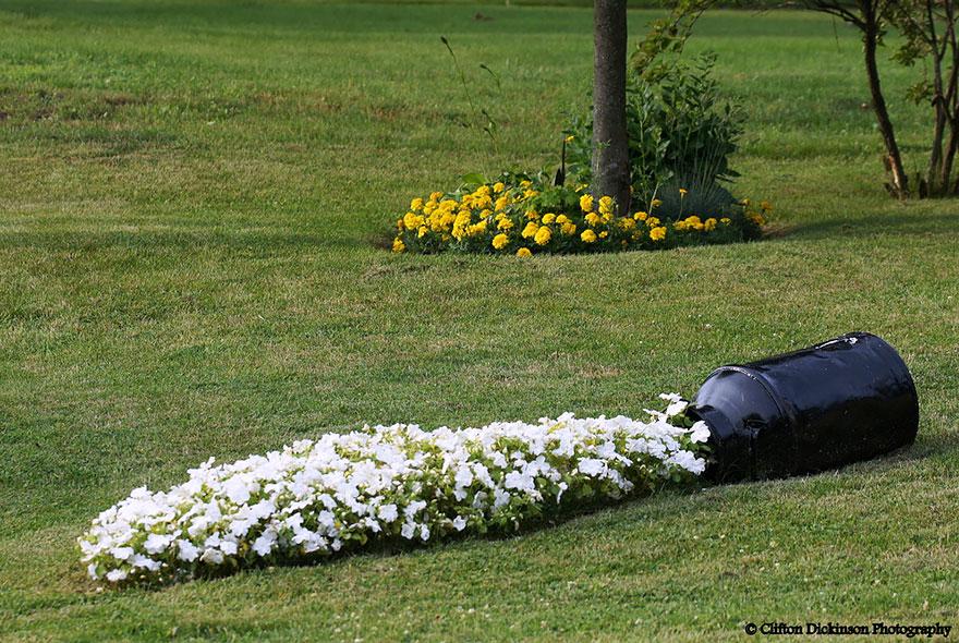 ideas-jardineria-flores-derramadas (7)