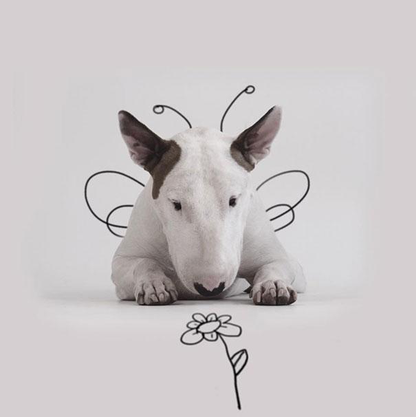 ilustraciones-interactivas-perro-jimmy-choo-rafael-mantesso (18)