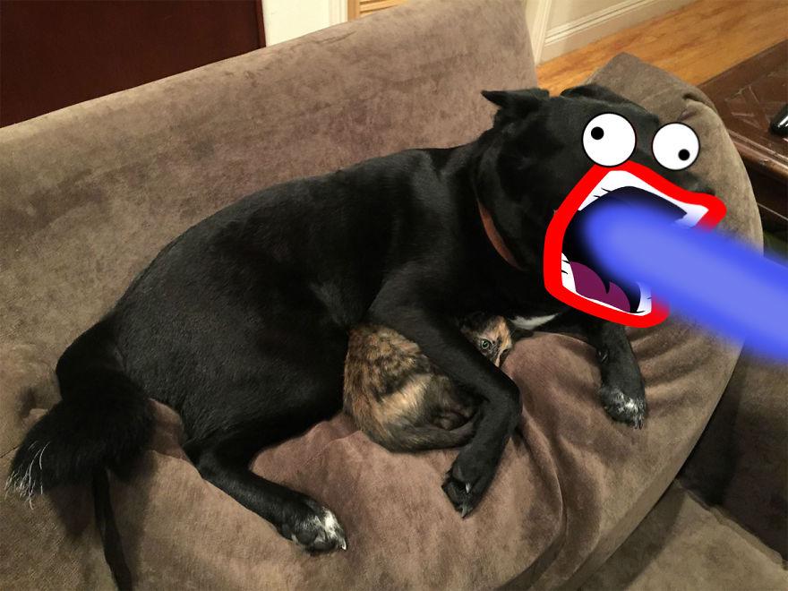meme-internet-perro-emocionado-protegiendo-gato (7)