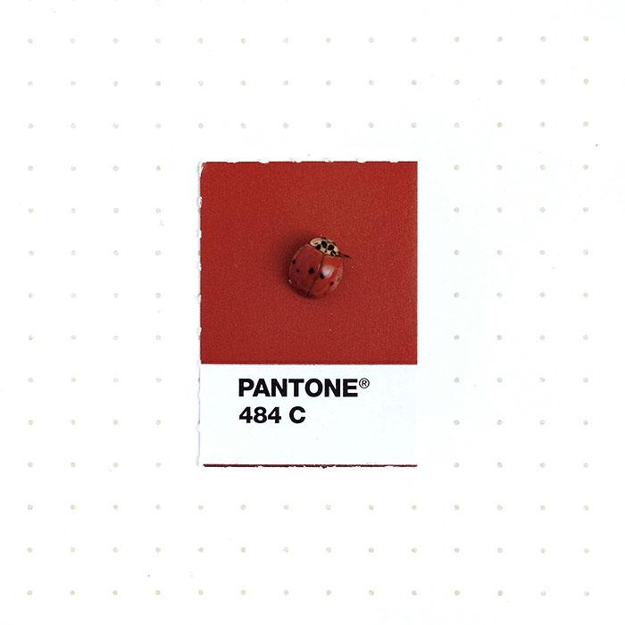 parejas-objetos-cotidianos-muestras-color-pantone-pms-inka-mathews (4)