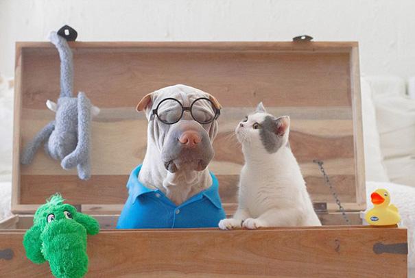 amistad-animal-sharpei-perro-gato-annie-jacobs (12)
