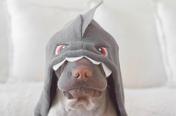 amistad-animal-sharpei-perro-gato-annie-jacobs (4)