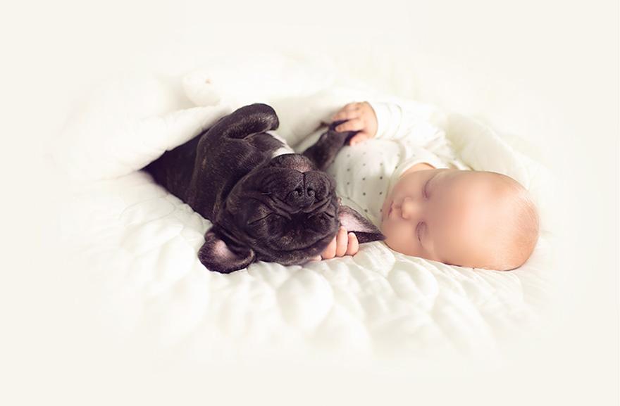 amistad-bebe-dilan-bulldog-farley-ivette-ivens (7)