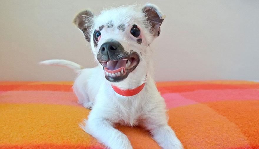 cachorro-perro-cicatrices-adoptado-hssv-christine-doblar (9)