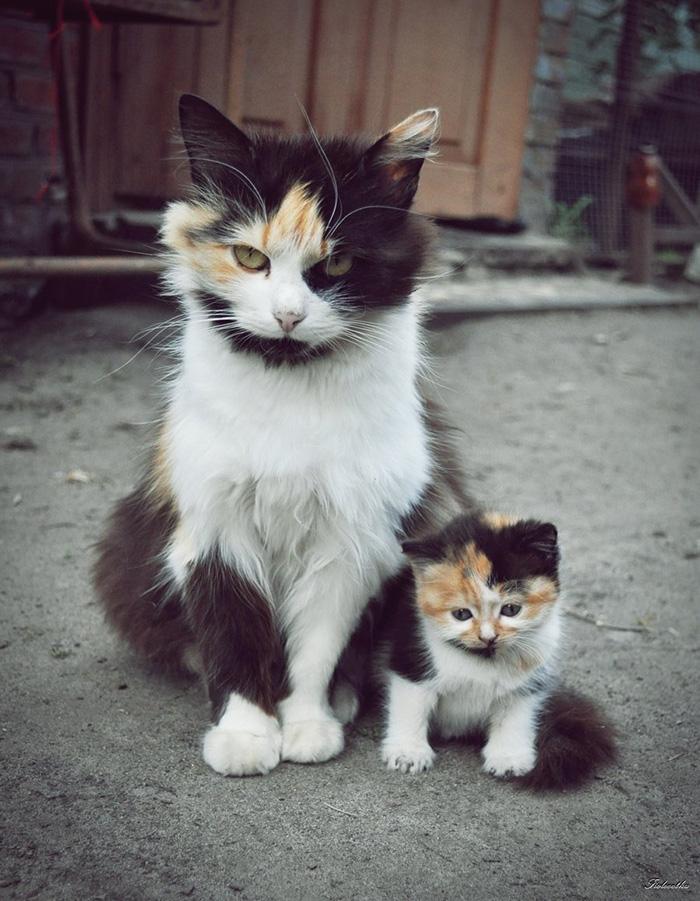fotos-familia-gatos-gatitos (10)
