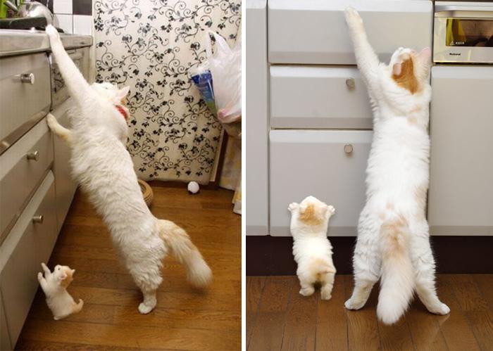 fotos-familia-gatos-gatitos (34)
