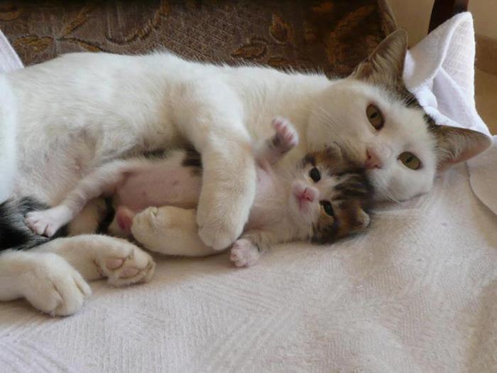 fotos-familia-gatos-gatitos (37)