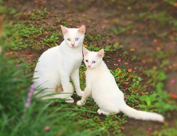 fotos-familia-gatos-gatitos (6)
